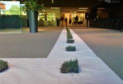 2021.09.03.   In memoriam Joseph Beuys